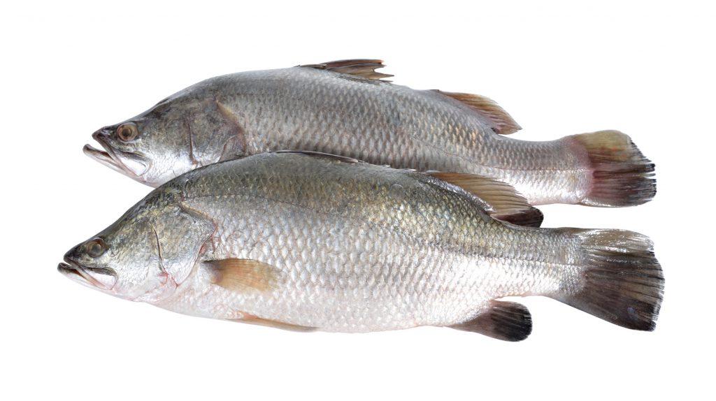 fish_on_white